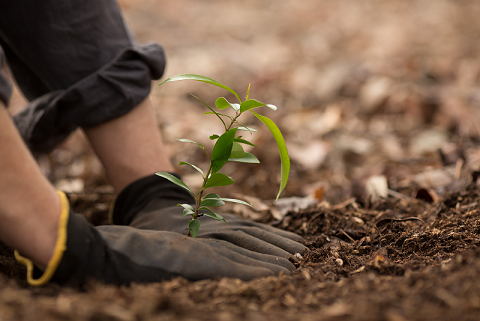 Planting a seedling tree shutterstock_212768245.png